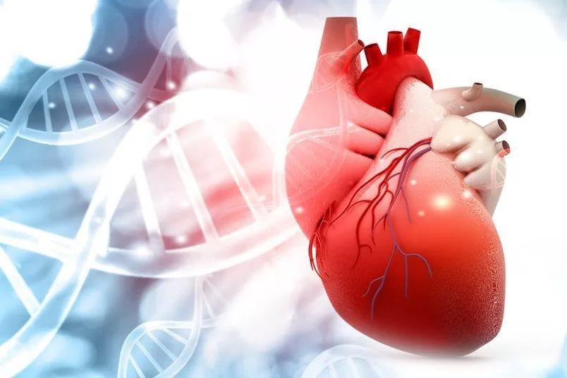 Записаться к кардиологу SBS med